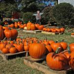 Bright Ideas: Pumpkin patches connect church and community