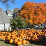 Walpole finds church in Epiphany's pumpkin patch